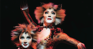 Cats for Auckland Live